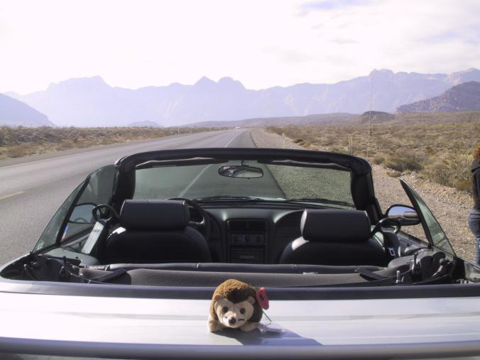 Mr Prickles on the open road